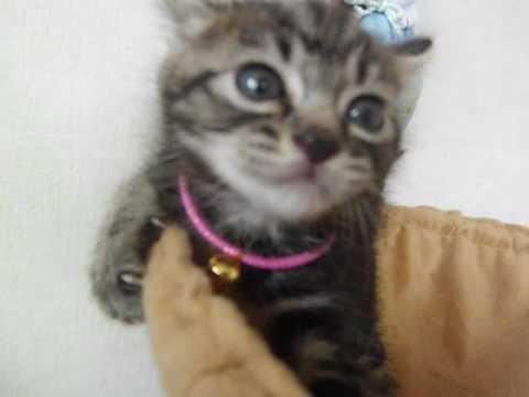 保護したばかりの子猫 まだ人馴れしていないので威嚇します