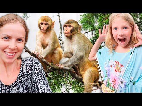 Вопрос: Как предотвратить и пережить нападение обезьян?