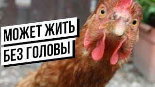 Реальные ЖИВОТНЫЕ ЗОМБИ(Часть 2)!