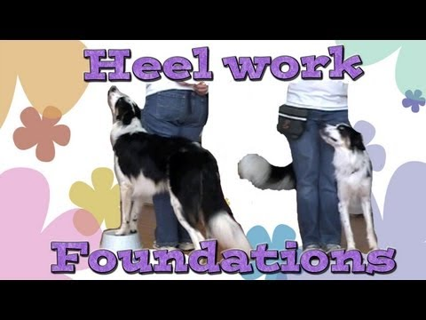 Heelwork Foundations: Clicker Dog Training
