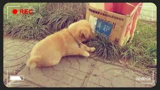 小土狗聪明可爱。