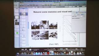"Bruno Olshausen: ""From Natural Scene Statistics to Models of Neural Coding & Representation, Pt. 1"""