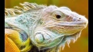 Животные мира Затерянный рай Дикая природа Остров тайфунов Тайвань Флора и Фауна Красота пейзажа