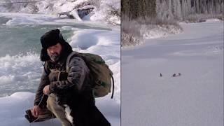 Сезон охоты (Иркутская обл)
