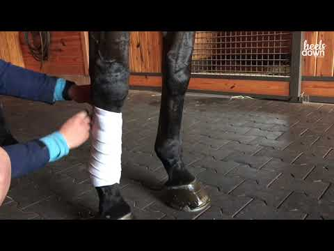 Polo Wrap a Horse's Leg the Right Way by Courtney Carson