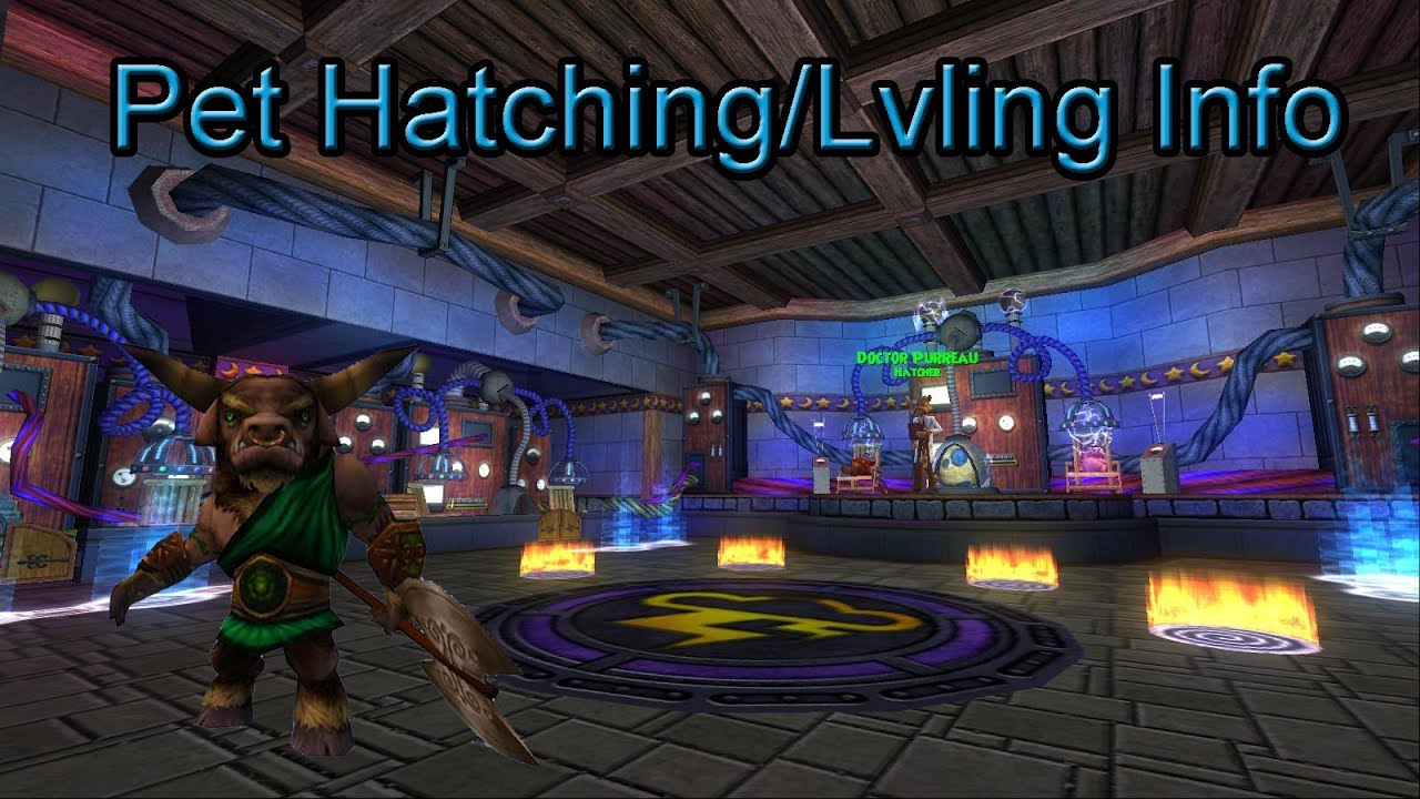 Wizard101: Everything You Need to Know About Pet Lvling/Hatching