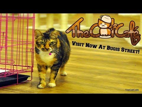 A Short Little Showcase Of Singapore's Cat Cafe! | 720p60 HD