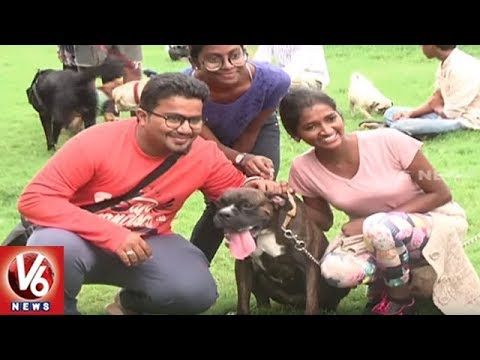 Weekend Dogs Park Culture In City || Hyderabad || V6 News