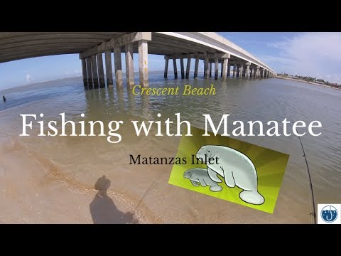 Onshore Fishing With A Manatee At Crescent Beach Matanzas Inlet