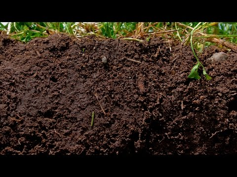 Feeding Soil Microbes Naturally... Plus Results