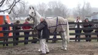 Silver Charm returns at Old Friends