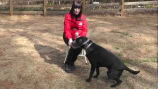 Kyle, Lab, Episode 11 (fear Aggression Exercise & Muzzle Training) - Sunl Atlanta Dog Training
