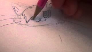 Как нарисовать аниме котика(Простите видео в конце оборволось всем печенек., 2014-07-25T08:30:37.000Z)