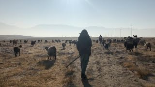 Afghan drought threatens shepherds | AFP