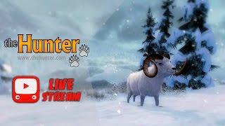 theHunter - Баран Далла | Dall Sheep | Обзор нового животного
