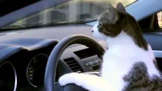 kucing meong nyetir mobil mitsubishi lancer