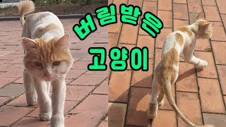 #버림받은고양이#미용이된채유기된고양이#