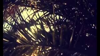 Trippy Turtle - Southside Deep