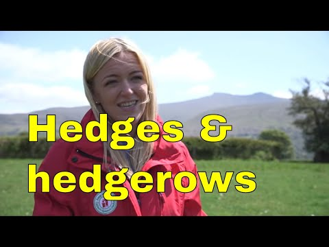 "Hedges & Hedgerow ecosystem conservation in Wales uk ""The Long Forest Project"" 15 minute documentary"