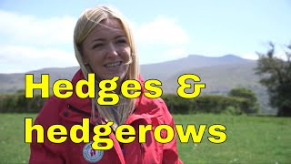 """Hedges & Hedgerow ecosystem conservation in Wales uk """"The Long Forest Project"""" 15 minute documentary"""
