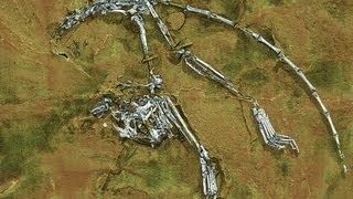 Fosil Primate Mas Viejo, Sky City, GPS Intergalactico y Mas | Ciencia