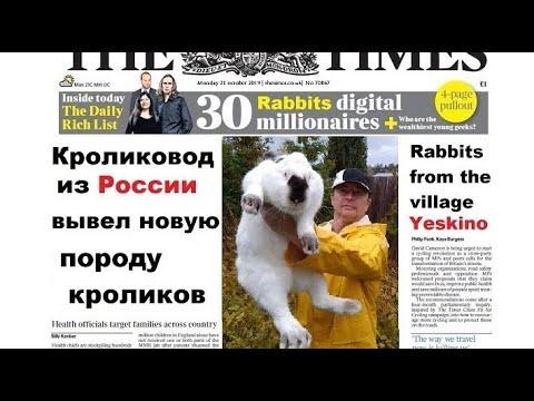 Кроликовод из России вывел новую породу кроликов% Rabbits From Russia