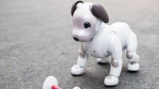 Sony сделала собаку-робота за 200 000 руб.