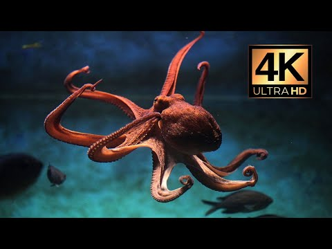 4K (Ultra HD) Unbelievable - The Most Beautiful Undersea Creature on Earth 🌍 | Marine Life Today