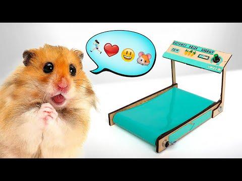 Cách Chế Máy Chạy Bộ Cho Chuột Hamster