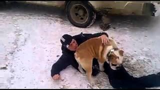 Собака пристала к пьяному