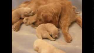 PUPPY PARTY ♥ PUPPIES COMPILATION # 8 ♥