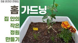 [탑골TV] 집 안의 작은 정원 만들기, 홈 가드닝