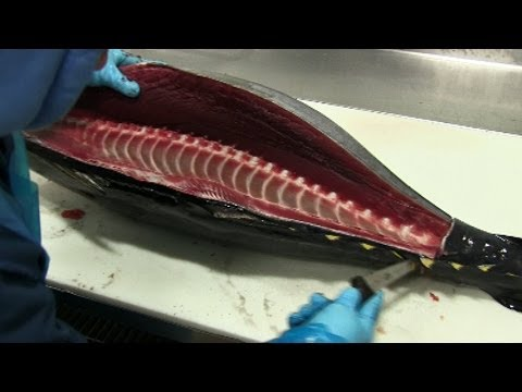 How to Fillet Tuna