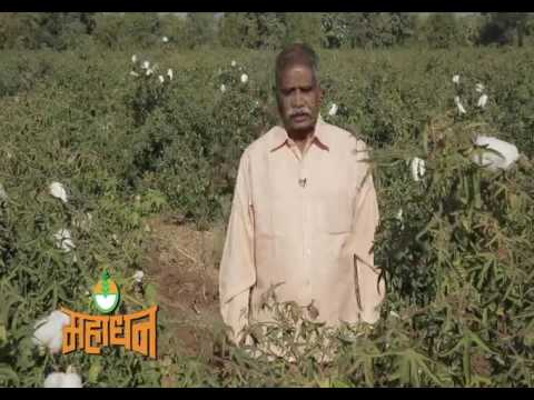 Mahadhan Farmer Testimonial | डाळींब | 2017