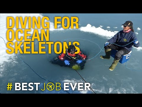 Diving Deep Below Arctic Ice to Bring Back Our Ocean's Skeletons | Best Job Ever