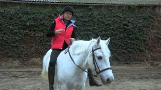 Montez votre cheval à cru - Equidia Life