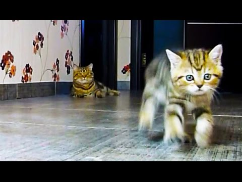Funny Cats and kittens F1 racing