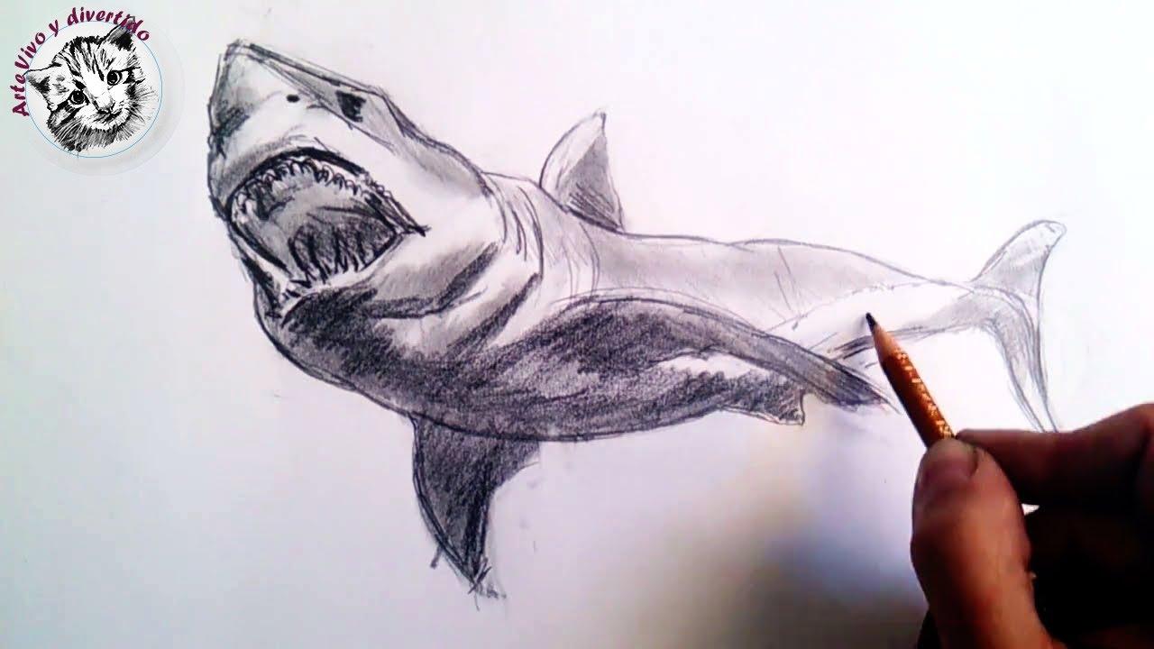 Como dibujar un tiburon a lapiz paso a paso: Tecnicas lápiz de grafito - YouTube