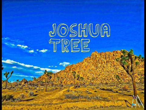joshua-tree-|-1-day-trip