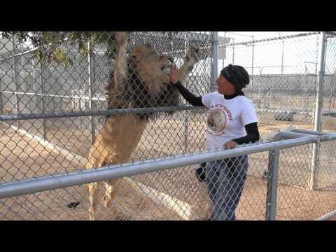 Our Day At Lion Habitat Ranch Las Vegas