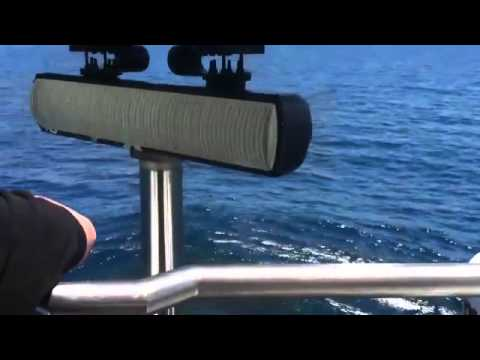 Dolphins outrun USS Mississippi submarine