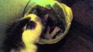 Добывательница еды для котят