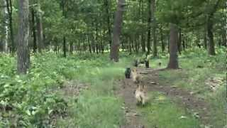 Red Creek Rebels Cairn Terrier Meeting 2012