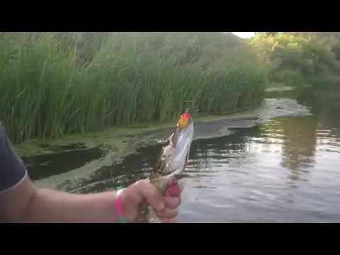 ШОК!!!!!! Ловля  щуки летом на поппер в июле