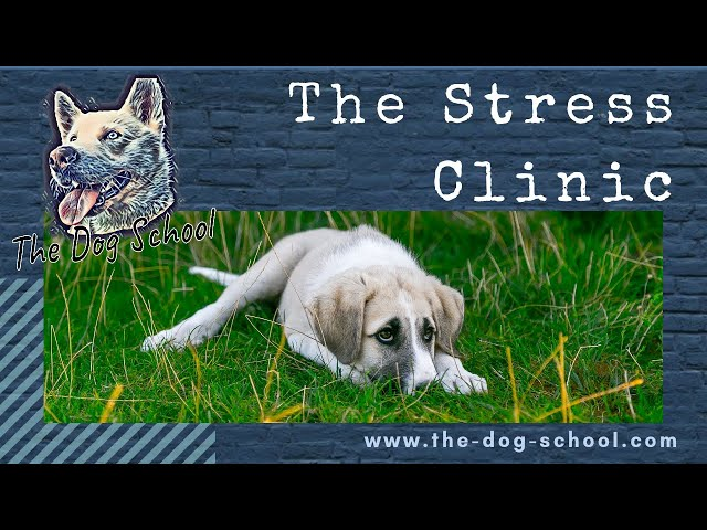 Identifying Stress In Your Dog
