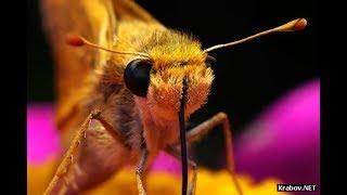 Приколы фото строения глаз различных насекомых