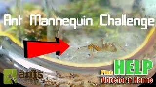 Ant Mannequin Challenge + Name Voting | Enter...