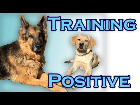 Welcome to Training Positive!