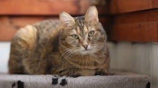 Видео тест Canon 50d(Попробовал Magic lantern на Canon 50d объектив 85 F 1.8 Кошку зовут Соня., 2016-03-18T09:47:33.000Z)