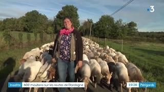 La transhumance des moutons dans la Double